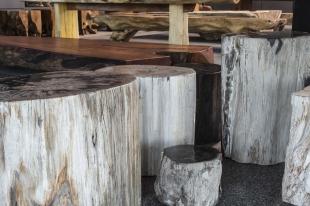 Tafel Versteend Hout : Versteend hout